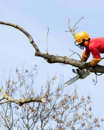 Trädfällning Skellefteå